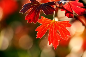 1409859800splendeurs-ephemeres-regarder-automne-big